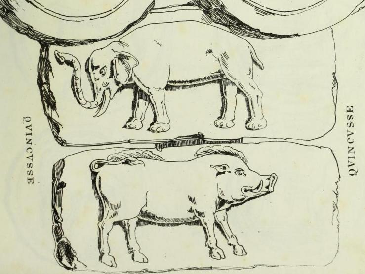 Yarrow - Elephants